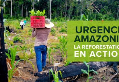 Urgence Amazonie : participez à la reforestation
