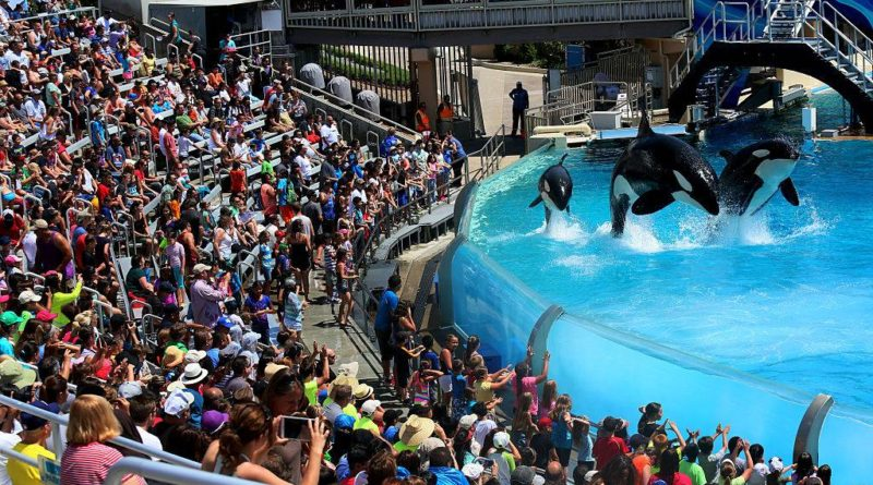 animaux - orques en captivité