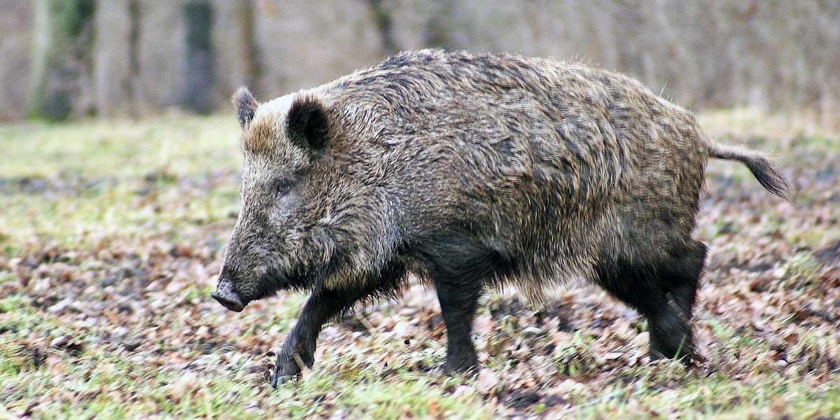 Alerte sur les destructions de la faune en période de confinement