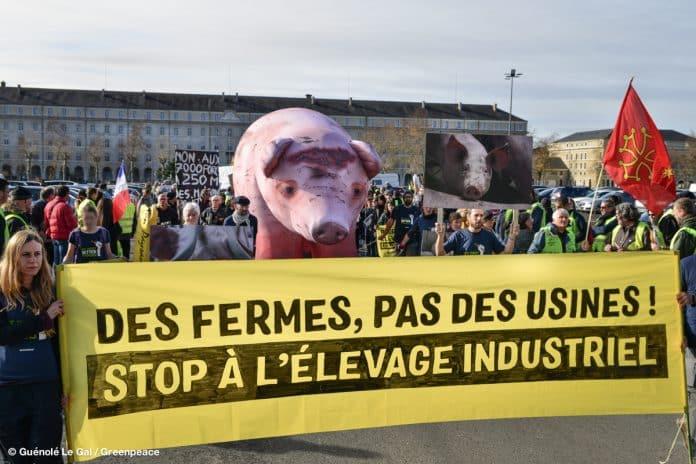 Stop à l'élevage industriel