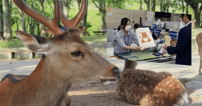 Cerfs en liberté dans le parc de Nara au Japon